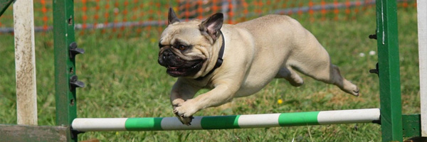 pet events dog jumping - 3 Pet Events Every Daycare Center Should Attend