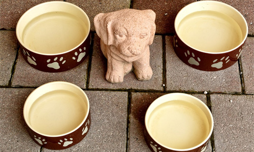 travel pet accessories dog bowl - 4 Travel Accessories for Your Pooch When Dropping Your Child at Daycare